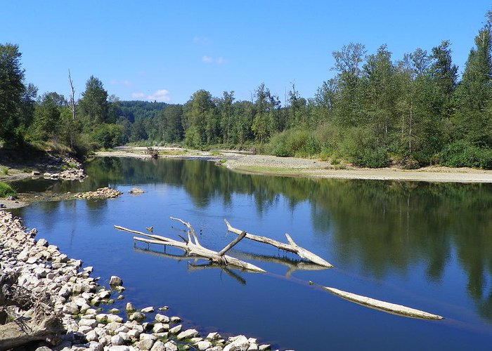Digital Photography Greeting Card featuring the photograph Chehalis River Washington by Laurie Kidd
