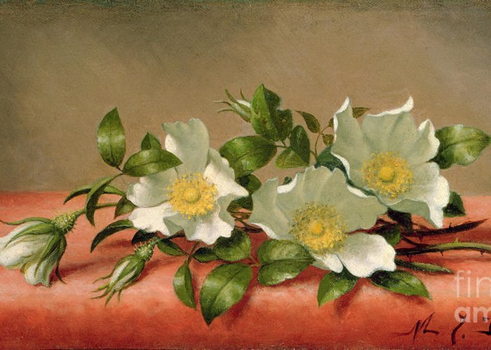 Cherokee Roses Greeting Card featuring the painting Cherokee Roses by Martin Johnson Heade