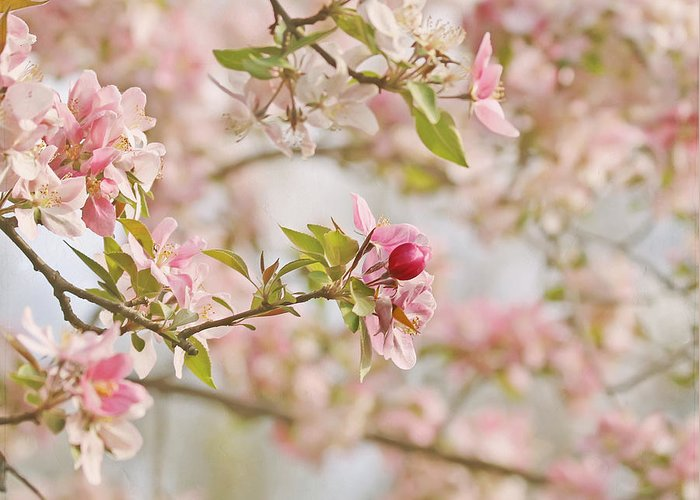 Cherry Blossom Greeting Card featuring the photograph Cherry Blossom Delight by Kim Hojnacki