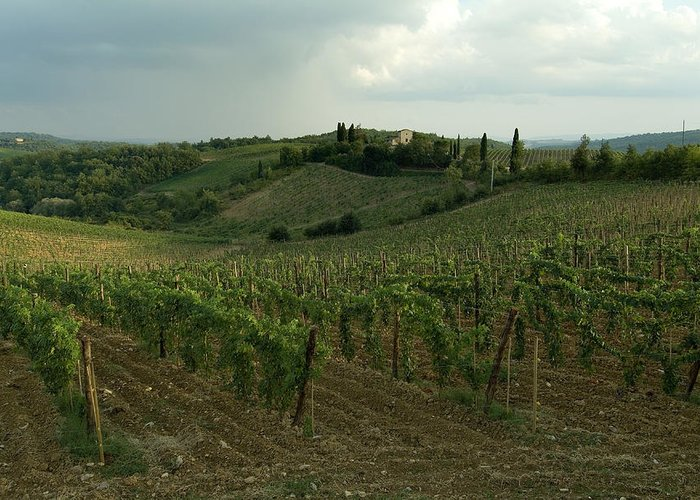 Chianti Greeting Card featuring the photograph Chianti Vineyards In Tuscany by Todd Gipstein