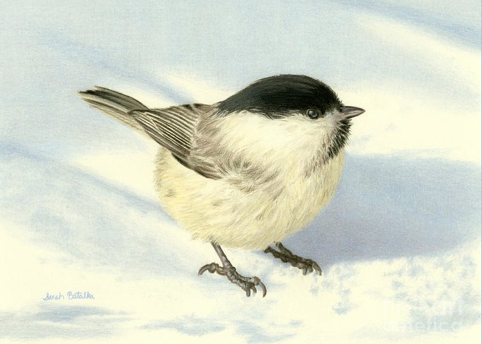 Birds In Snow Greeting Cards