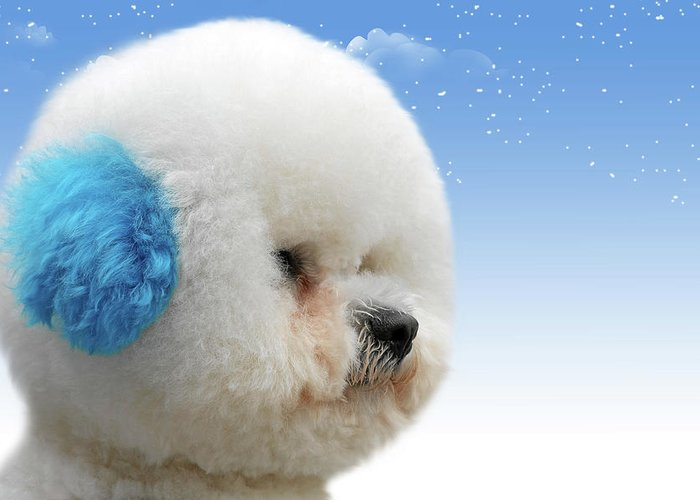 Bichon Frises Greeting Card featuring the photograph China's Latest Craze - Dyeing Pets by Christine Till