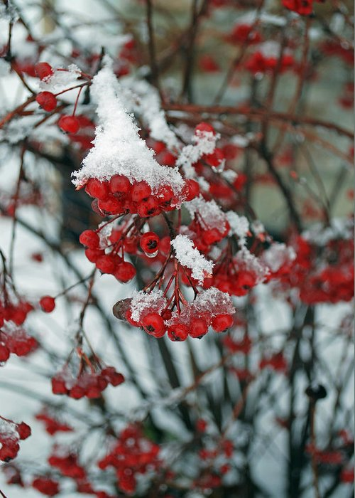 Landscape Greeting Card featuring the photograph Chokeberry Ice by Lisa Gabrius