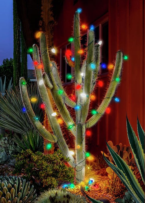 Christmas Cactus Greeting Card featuring the photograph Christmas Cactus by Kelley King
