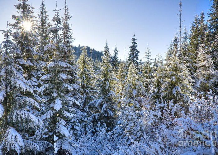 Christmas Greeting Card featuring the photograph Christmas Morning by Idaho Scenic Images Linda Lantzy