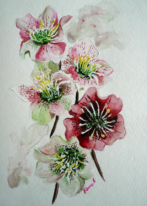 Floral Flower Pink Greeting Card featuring the painting Christmas Rose by Karin Dawn Kelshall- Best