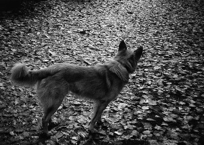 Lensculture Greeting Card featuring the photograph Chuvak  #dog #dogslover #animal #pet by Rafa Rivas