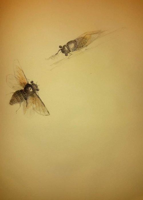 Bugs. Cicada Greeting Card featuring the drawing Cicada Pair by Debbi Saccomanno Chan