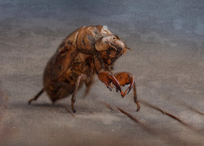 Cicada Greeting Cards