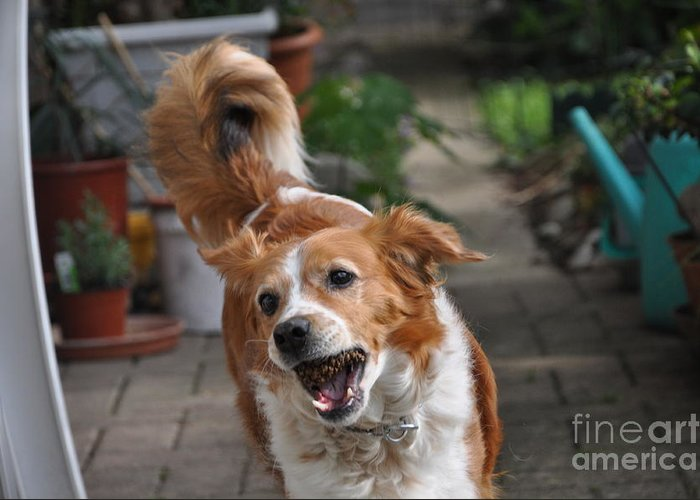 Animal.dog.photography Greeting Card featuring the photograph Cindy 4 by Helena Hope