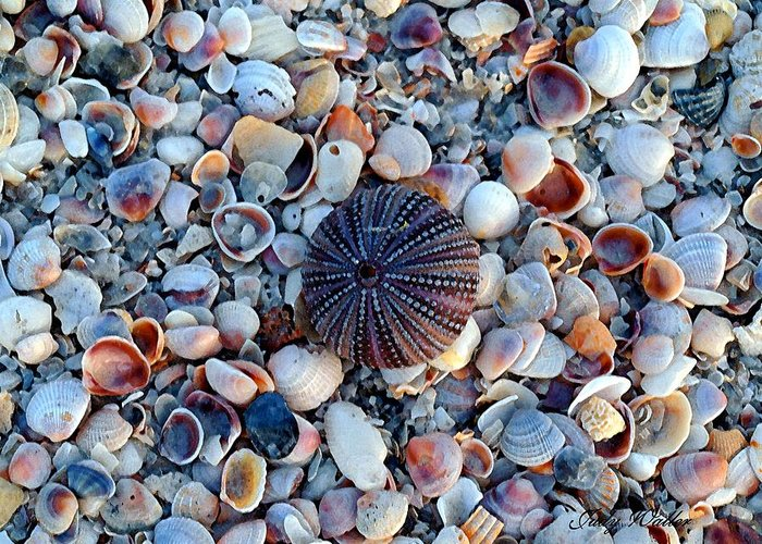 Shell Greeting Card featuring the photograph Circluar Shell In Watercolor by Judy Waller