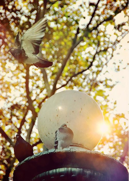New Greeting Card featuring the photograph City Doves by JAMART Photography