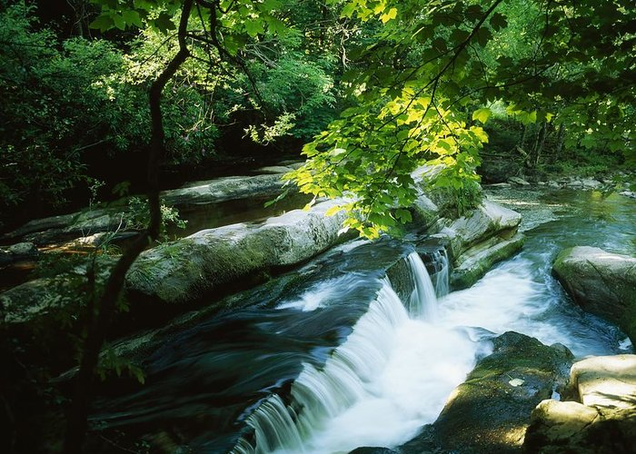 Motion Blur Greeting Card featuring the photograph Clare Glens, Co Clare, Ireland by The Irish Image Collection