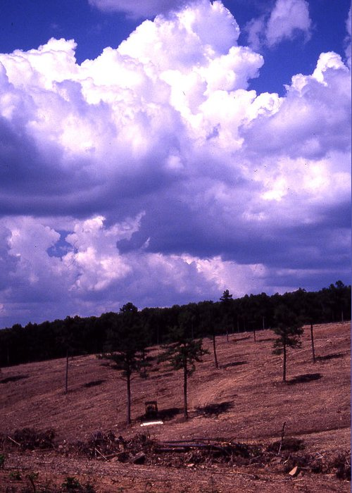 Greeting Card featuring the photograph Clear-cut by Curtis J Neeley Jr