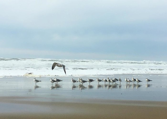 Seagulls Greeting Card featuring the photograph Cleared For Takeoff by Donna Blackhall