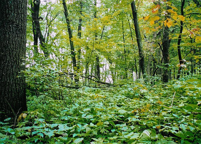 Forest Greeting Card featuring the photograph Clearing Glimpsed 6 by Tom Hefko