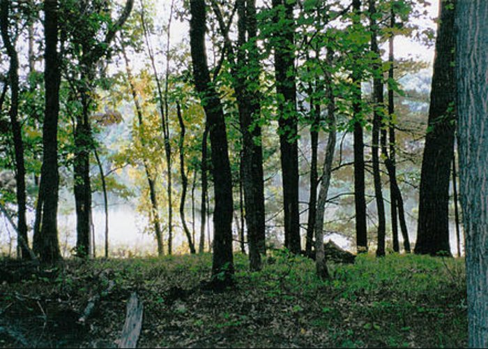 Forest Greeting Card featuring the photograph Clearing Glimpsed 9 by Tom Hefko