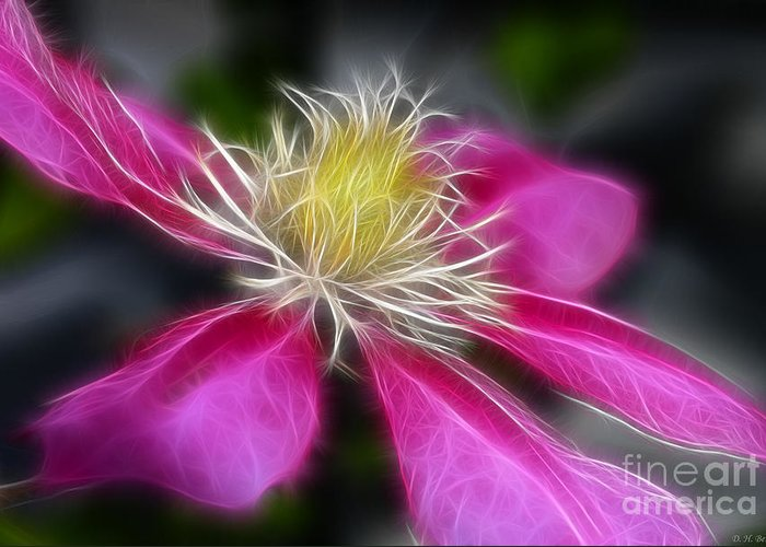 Flower Greeting Card featuring the photograph Clematis In Pink by Deborah Benoit