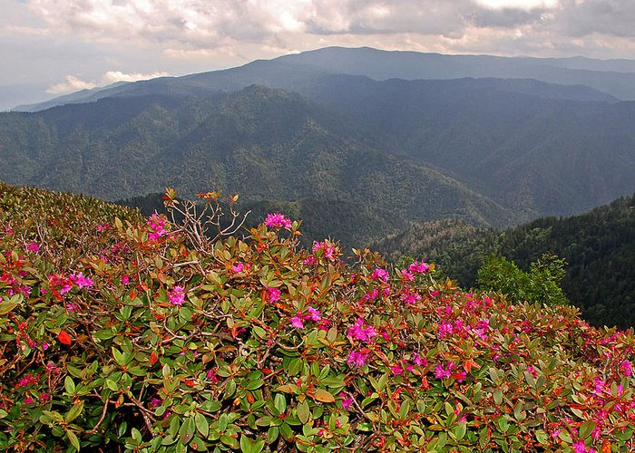 Clingman's Dome Greeting Card featuring the photograph Clingman's Dome From Cliff Top by Alan Lenk