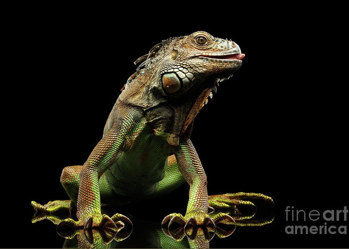 Reptiles Greeting Cards