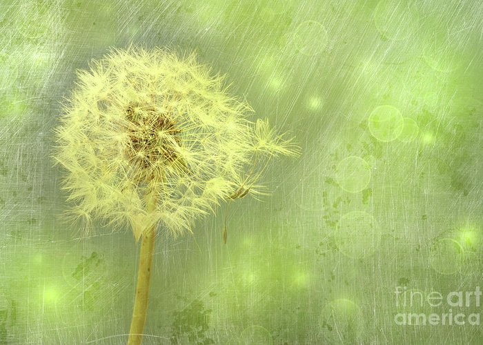 Background Greeting Card featuring the photograph Closeup Of Dandelion With Seeds by Sandra Cunningham