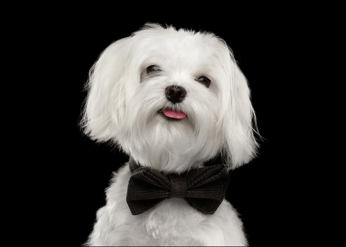 Image result for dog with bow