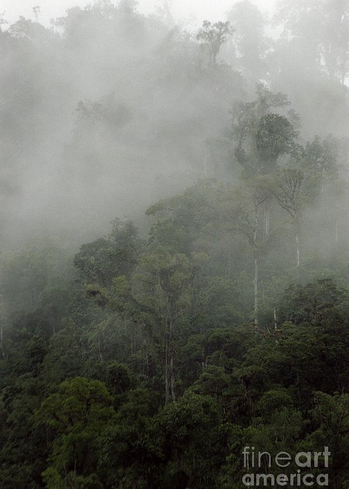 Rainforest Greeting Card featuring the photograph Cloud Forest by Kathy McClure