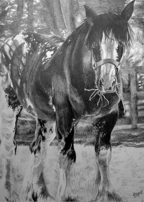 Horse Greeting Card featuring the drawing Clydesdale by Darcie Duranceau