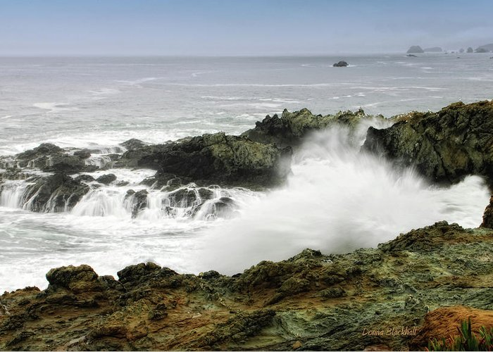 Coast Greeting Card featuring the photograph Coastal Expressions by Donna Blackhall