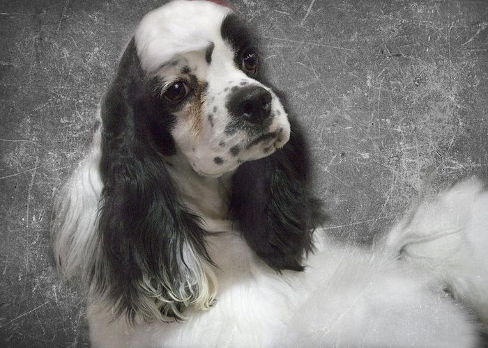 Cocker Greeting Card featuring the photograph Cocker Spaniel by Rebecca Cozart