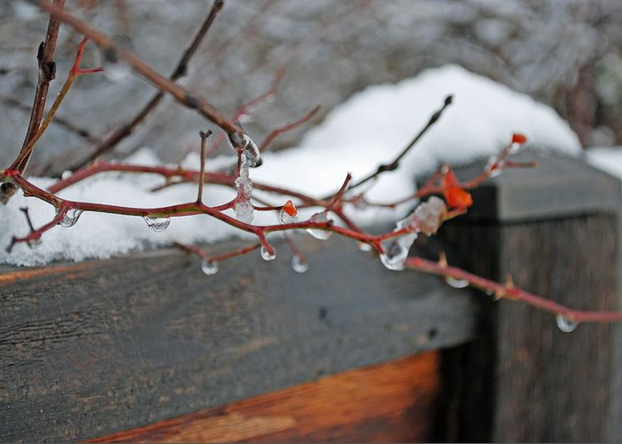 Fence Greeting Card featuring the photograph Cold Day by Lisa Gabrius