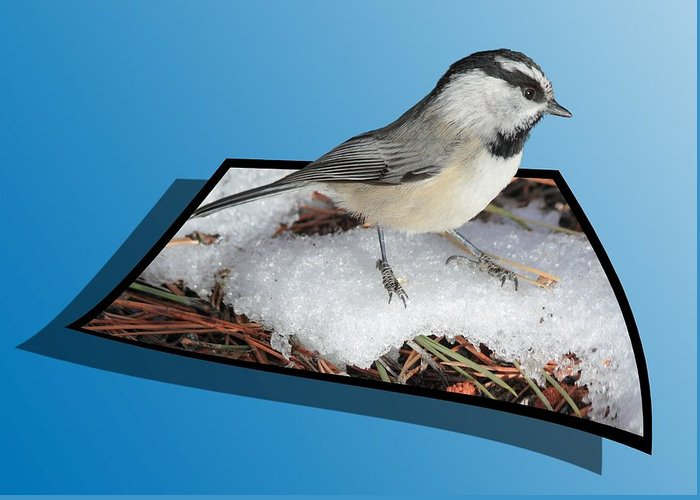 Chickadee Greeting Card featuring the photograph Cold Feet by Shane Bechler