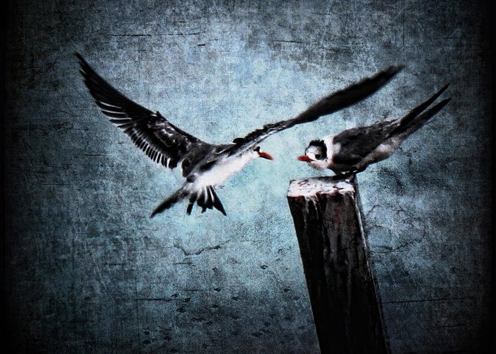 Tern Greeting Card featuring the photograph Colder Confrontations by Andrew Paranavitana