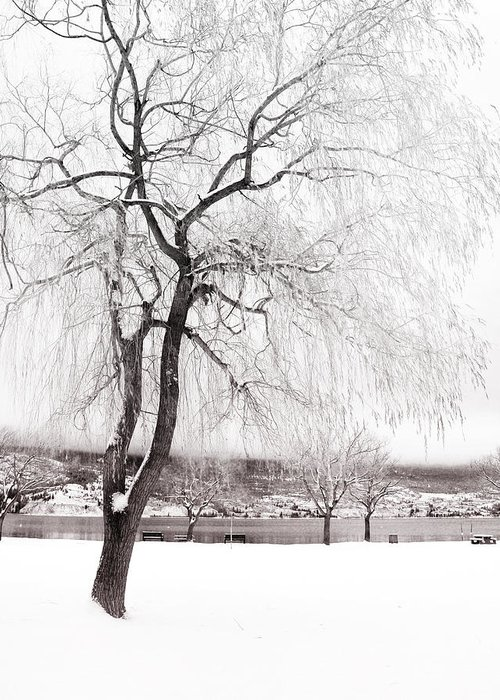 Tree Greeting Card featuring the photograph Coldness by Tara Turner