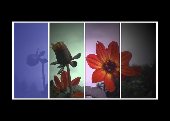 Flowers Greeting Card featuring the digital art Color My World by Holly Ethan