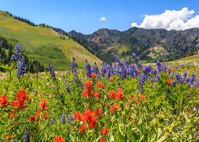 Trailsxposed Greeting Card featuring the photograph Color Of Summer by Gina Herbert