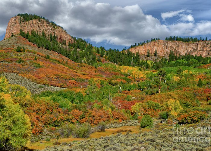 Colorado Greeting Card featuring the photograph Colorado Fall Colors 1 by Kenneth Eis