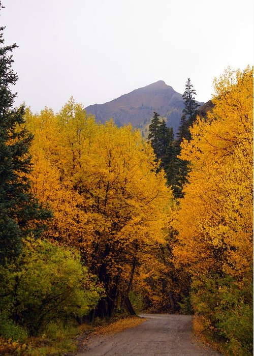 Fall Colors Greeting Card featuring the photograph Colorado Road by Marty Koch