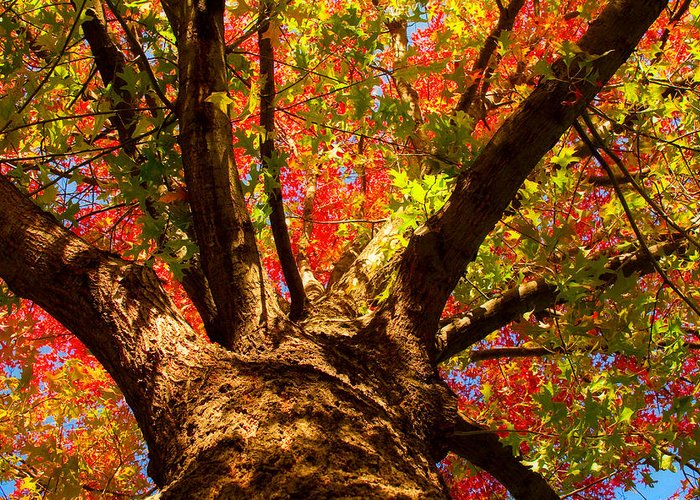 Forest Greeting Card featuring the photograph Colorful Autumn Abstract by James BO Insogna