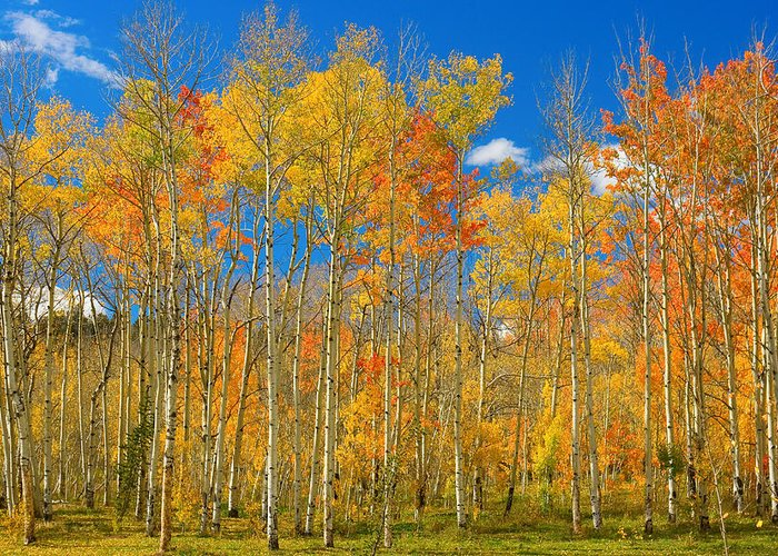 Autumn Greeting Card featuring the photograph Colorful Colorado Autumn Landscape by James BO Insogna