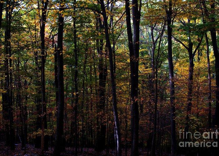 Fall Season Greeting Card featuring the photograph Colorful Fall Season by Robin Lynne Schwind