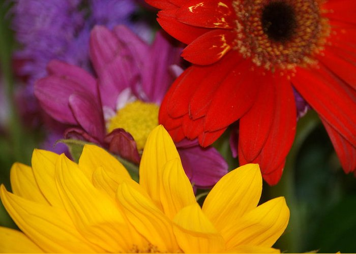 Flower Greeting Card featuring the photograph Colorful Flowers by Liz Vernand