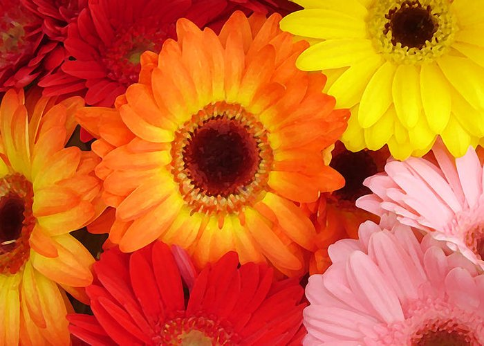 Gerber Daisy Greeting Card featuring the painting Colorful Gerber Daisies by Amy Vangsgard