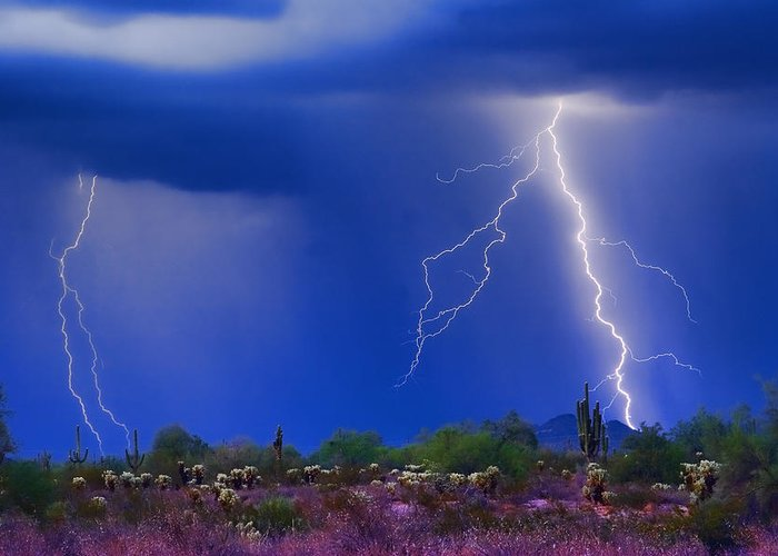 Arizona; Az; Desert; Cactus; Saguaro; Blue; Purple; Lightning; Lightening; Chasers; Lightning Poster; Lightning Photography; Lightning Gallery; Picture Of Lightning; Lightning Storm Pictures; Pictures Of Storm Clouds And Lightning; Lightning Art; Greeting Card featuring the photograph Colorful Sonoran Desert Storm by James BO Insogna