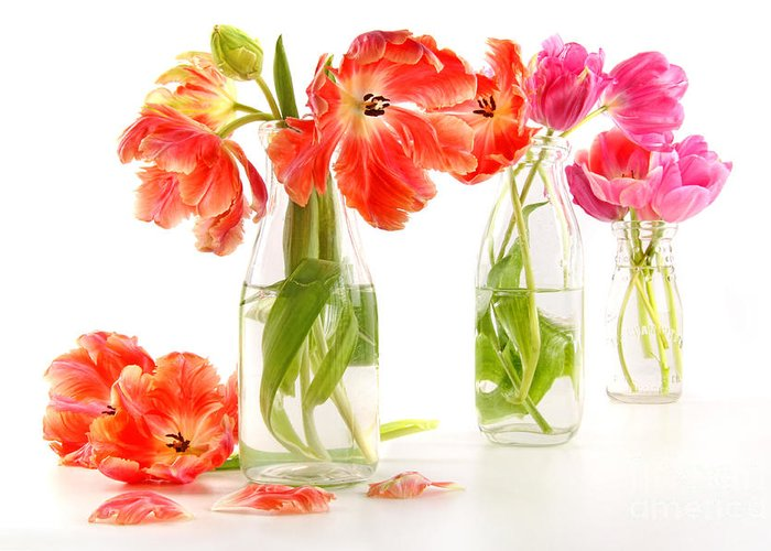 Background Greeting Card featuring the photograph Colorful Spring Tulips In Old Milk Bottles by Sandra Cunningham