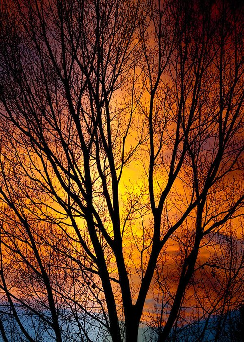 Vertical Greeting Card featuring the photograph Colorful Tree Silhouettes by James BO Insogna