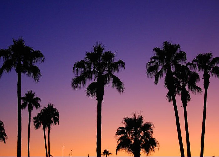 Sunsets Greeting Card featuring the photograph Colorful Tropical Palm Tree Sunset by James BO Insogna