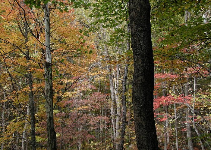 Fall Greeting Card featuring the photograph Colors by Bj Hodges