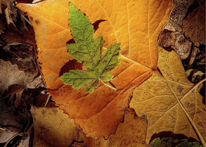 Autumn Greeting Card featuring the photograph Colors Of Autumn by Marie Leslie