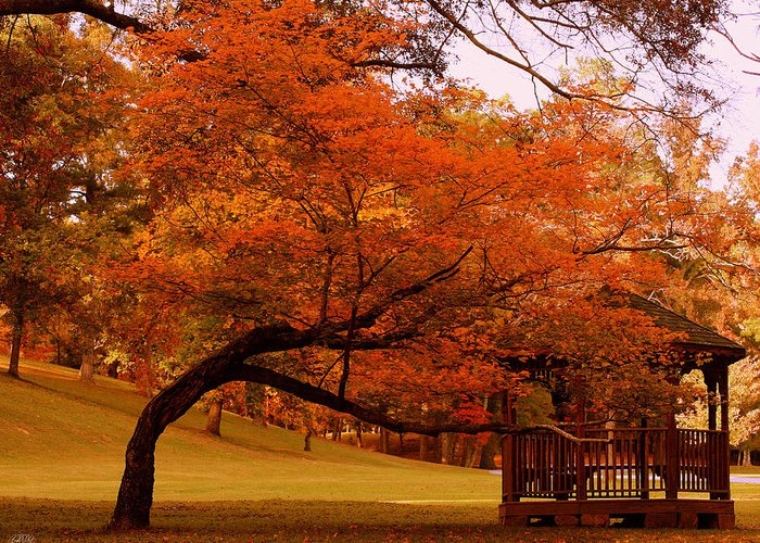 Berry College Greeting Card featuring the photograph Colors Of The Season by Jason Blalock